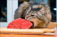 Вредно ли животным есть сырое мясо?