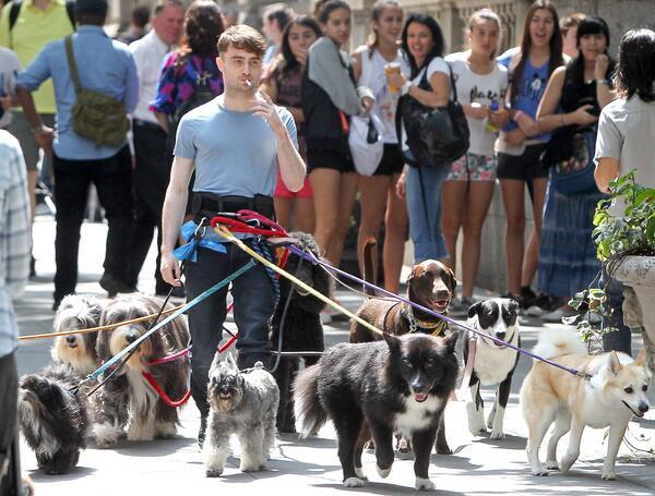 Дэниел Рэдклифф в окружении десятка собак