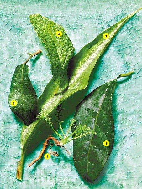 Травяные чаи для вашего здоровья и красоты