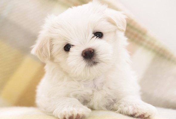 Как приучить щенка к команде «Фу»