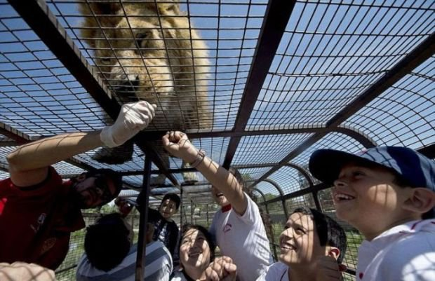 Необычный зоопарк, в котором в клетке сидят люди