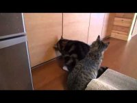 Толстый и тонкий, или похождения двух котов за Kitty Cat