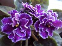 Чудо-раствор для безнадежных цветов