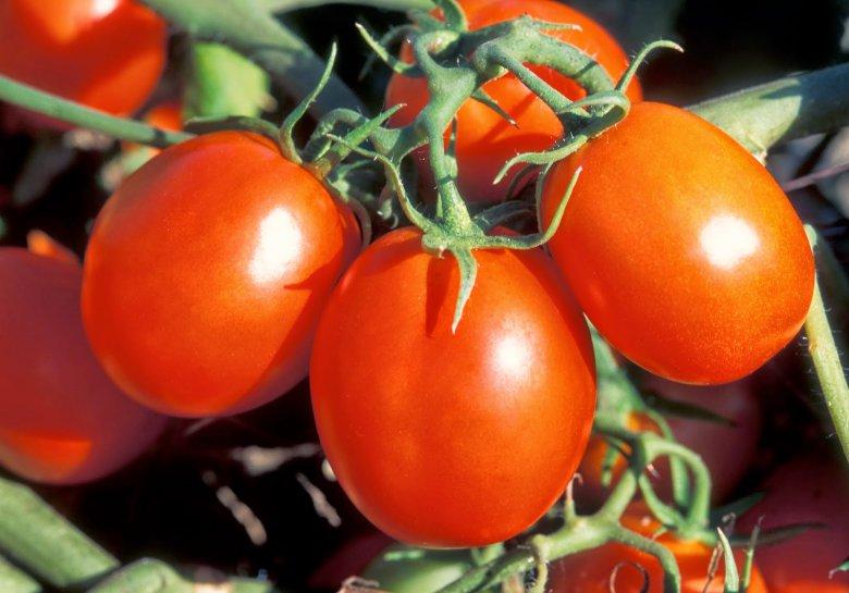 Универсальные подкормки для помидоров