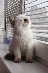 Почему мурчат кошки?