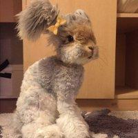 Кролик Валли - кролик с очень необычными ушками