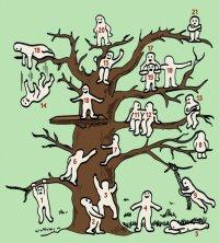 Тест: найди себя на дереве