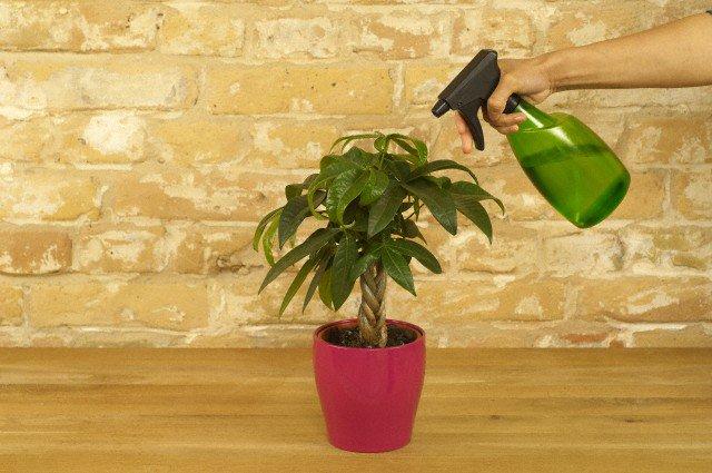 Внекорневая подкормка растений: зачем она нужна и как проводить