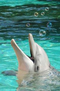 И все-таки дельфины разумные