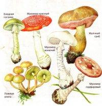 Самые распространенные ядовитые грибы