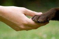 Как ухаживать за когтями собаки