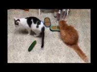 Коты и ужасные огурцы