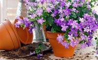 Лунный календарь комнатных растений 2016