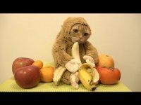 Милота дня: котик-обезьянка кушает банан