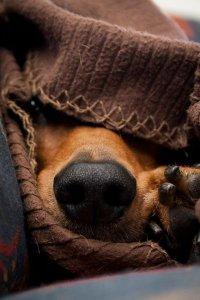Как заметить простуду у животного