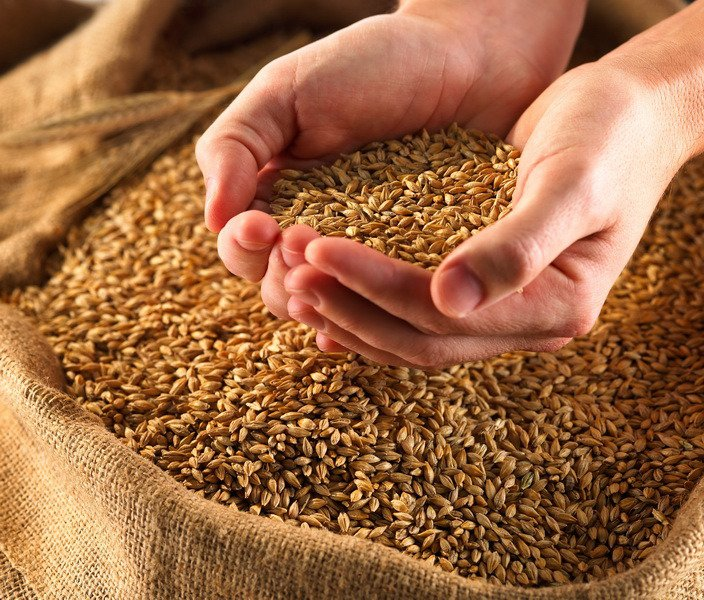 Пшенично-ячменный тест, или как определяли беременность в Древнем Египте