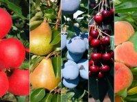 Совместимость садовых деревьев