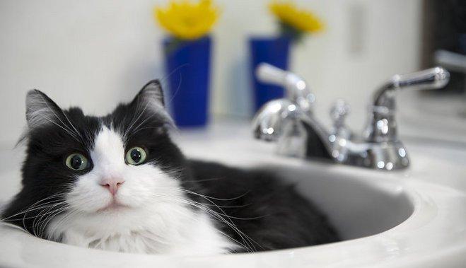 Как ухаживать за кошкой в жару