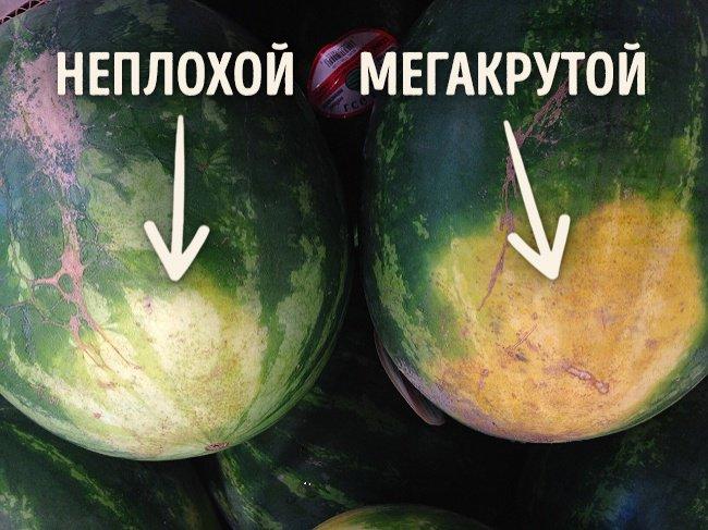 Как правильно выбрать арбуз: советы от мегакрутого фермера